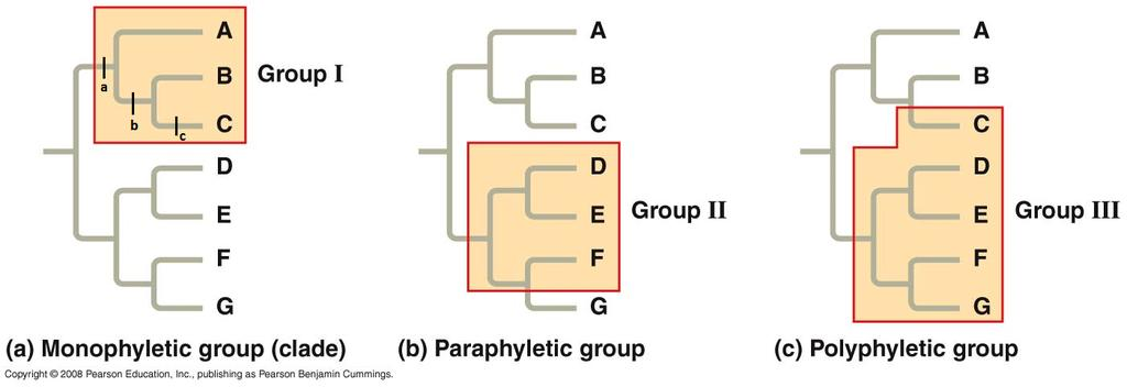 4 A cladograph shows how different groups of organisms are related. A phylogeny shows how different groups of organisms are related and provides times that each of these organisms existed.