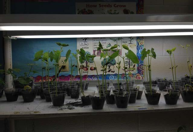 Elementary Science Classroom Tested!! Growing 2nd Graders and Plants! By Charles Bucienski (1st 3rd Science Specialist, Olivet Community Schools) Back to school again 2013 2014!