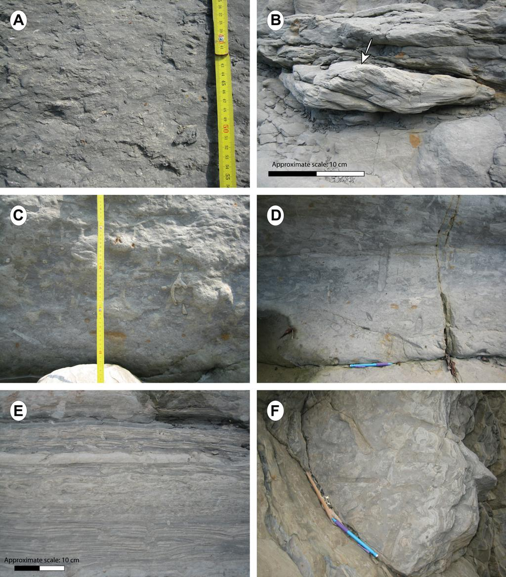 S. Castelltort et al. / Journal of Asian Earth Sciences 40 (2011) 52 71 59 Fig. 7. Field photographs of facies from the Meishan section.