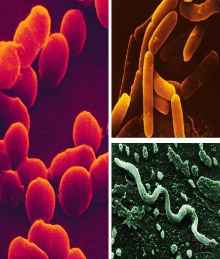 Topic: Bacteria & Archea Objective: Describe and define the prokaryotic Kingdoms.