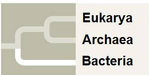 Domains- A Recent Development Carl Woese proposed three domains based the rrna differences prokaryotes and eukaryotes. The prokaryotes were divided into two groups Archaea and Bacteria.