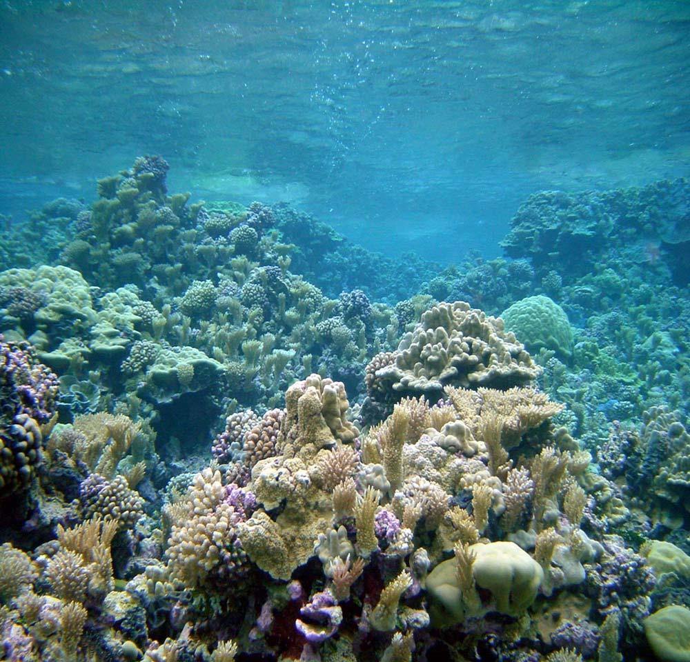 NOAA Coral Reef Ecosystem Division Pacific Island Fisheries Science Center Mission Statement Conduct research that provides