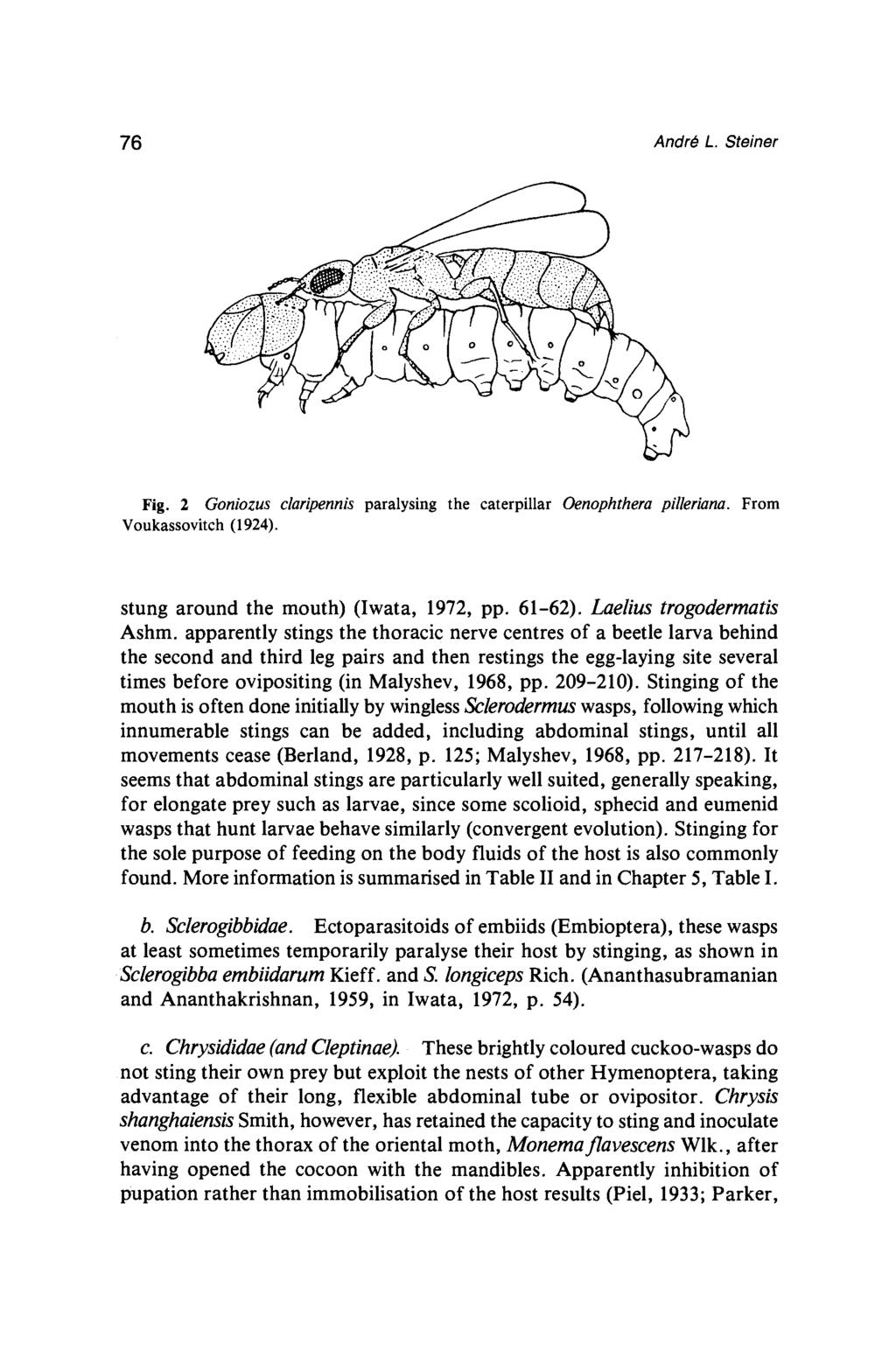76 Andro L. Steiner Fig. 2 Goniozus claripennis paralysing the caterpillar Oenophthera pilleriana. From Voukassovitch (1924). stung around the mouth) (Iwata, 1972, pp. 61-62).