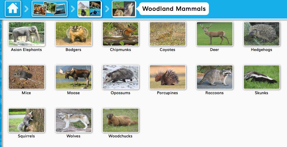 If you select Woodland Mammals