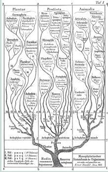 Tree of life Charles Darwin species share