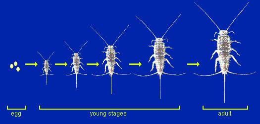 Insect Metamorphosis An insect s skeleton is on the outside so