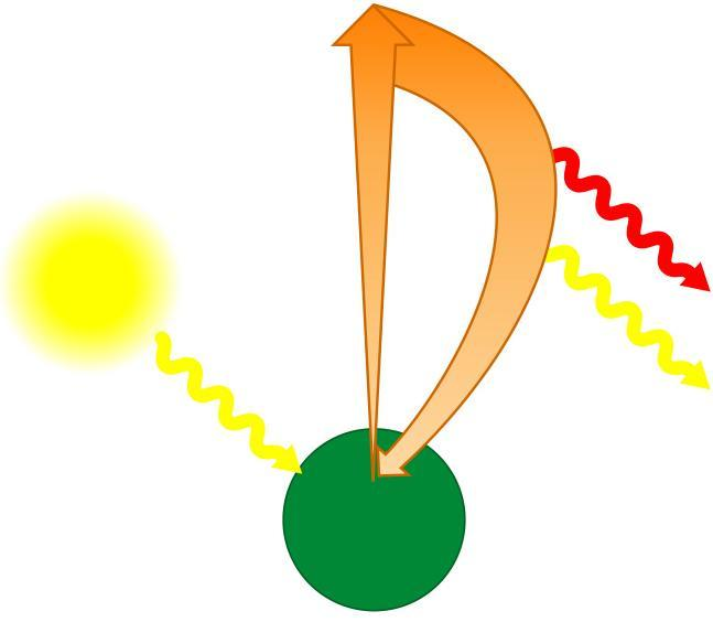 Excitation of chlorophyll in a chloroplast e 2 Excited state Loss of energy due to heat causes the photons of light to be less energetic. Light Heat Less energy translates into longer wavelength.