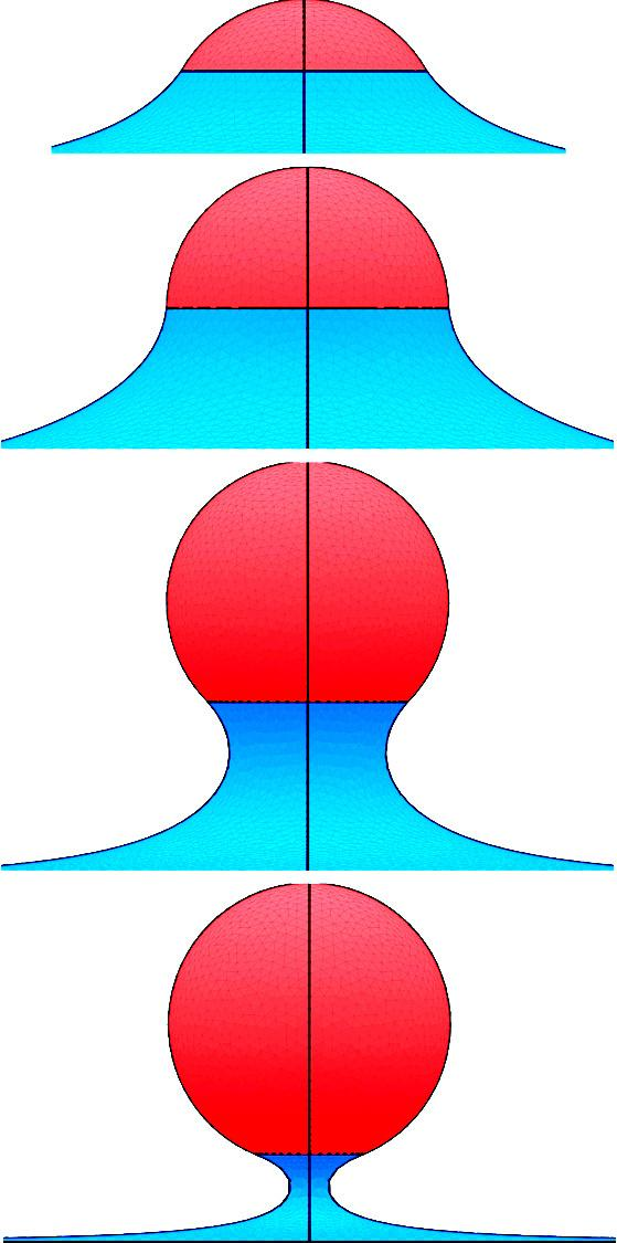 curvature region progressively. Therefore, ellipsoidal particles are oriented with their major axis aligned parallel to a membrane patch that is enclosed by a circular wire frame of radius a, see Fig.
