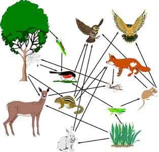 food chain a group of living things where each one