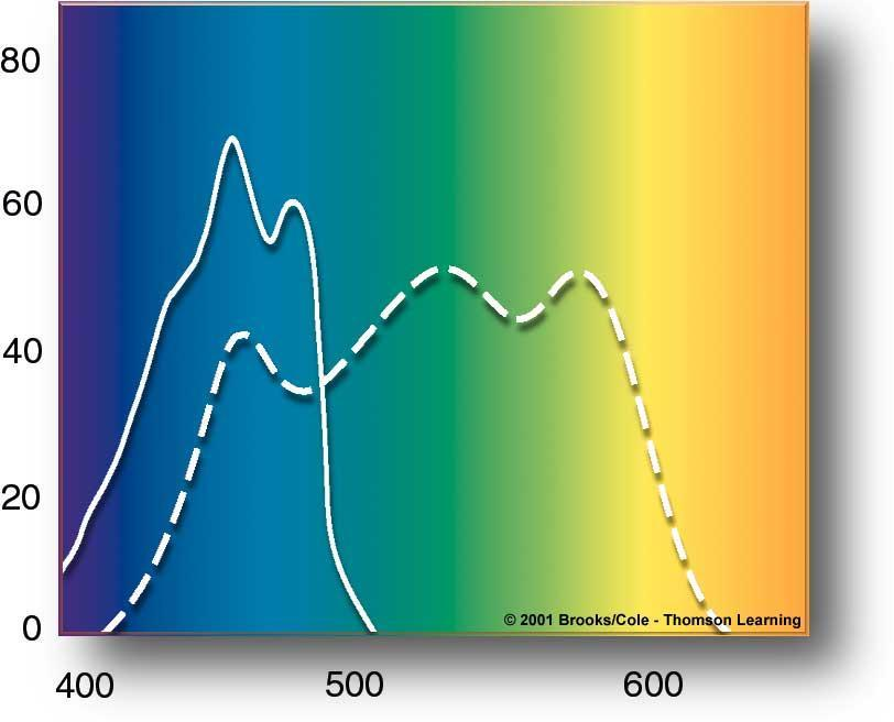 percent of wavelengths absorbed Accessory Pigments Carotenoids, Phycobilins,