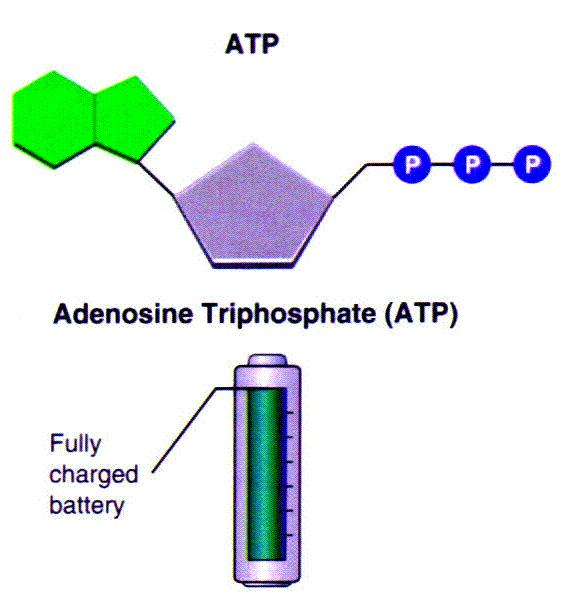 in ATP Removing A Phosphate Group From