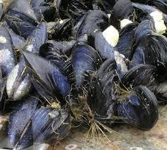 UDI 2: FAUNIA. ANIMALS-INVERTEBRATES(8) ACTIVITIES 1.- Read and circle the correct word. Mussels have a shell/ b.