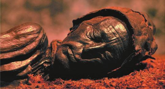 As a result, some peatlands have preserved corpses for thousands of years (Figure 29.10b).