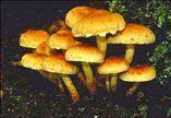 III. KINGDOM FUNGI - mainly do not move from place to