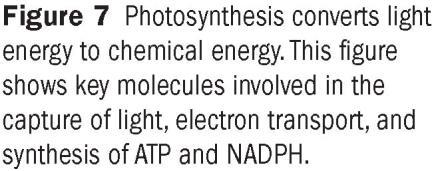 of Photosynthesis