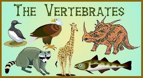 B) Vertebrates Classes include fishes, amphibians, reptiles,