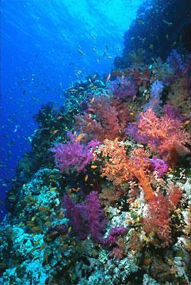 Characteristics Most live individually except for coral & hydra Coral live as a colony of polyps