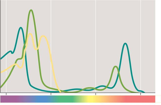 Absorption of light by chloroplast pigments The absorption spectra of three types of pigments in chloroplasts EXPERIMENT Three different experiments helped reveal which wavelengths of light are