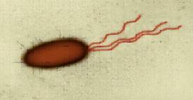 around the cell Flagella Long