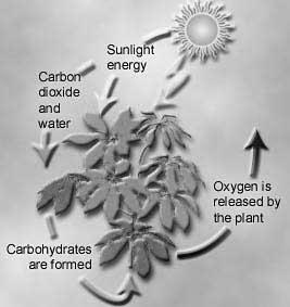 Responsible for O 2 in our atmosphere Carbon source Autotrophs producers (phototrophs)