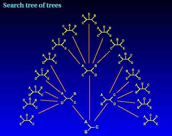 ree search strategies Exact search possible for small n only Branch and Bound Use cleaver rules to avoid some branches of trees up to ~0 () taxa Local search -