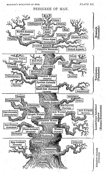 brief history of molecular phylogeny