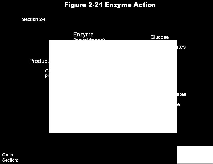 Activation energy is the energy needed to start a chemical reaction Enzymes are substances that