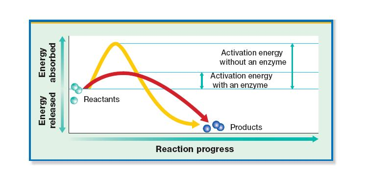 Substrate is a substance on which an enzyme acts during a chemical reaction An