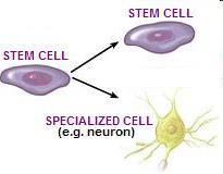 Cell Specialization In multicellular organisms, such as animals and plants cells within the organisms body become