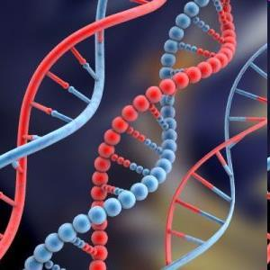 Nucleic Acids Are molecules that store information for cells.
