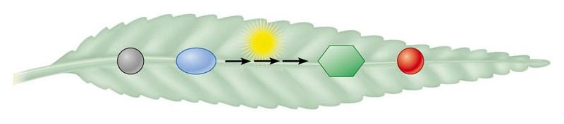 Photosynthesis Life on the surface of Earth is powered by solar energy that is converted into chemical energy in organic