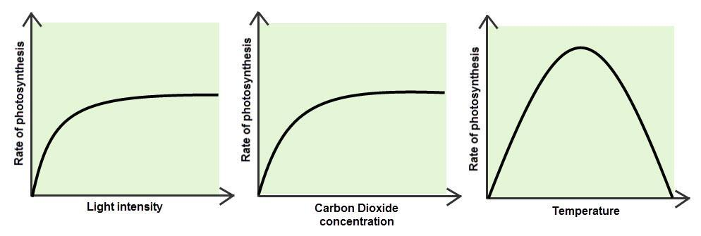 Rates of Photosynthesis vs.