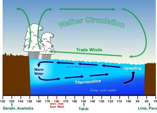What Causes El Niño Typical Pacific Circulation El Niño Trade winds weaken in central and eastern Pacific As a