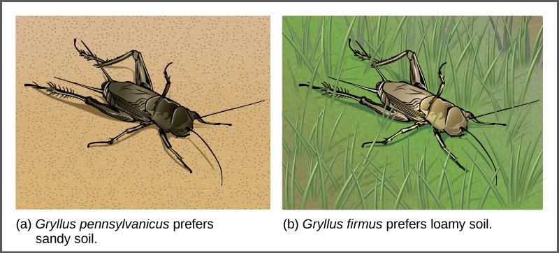 Reproductive Isolation is Key to Speciation Reproductive isolation is some kind of