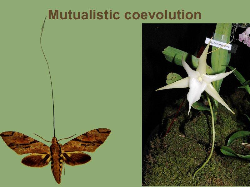 Coevolution Two species
