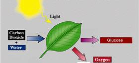 energy Chlorophyll Process that transforms light energy into chemical energy