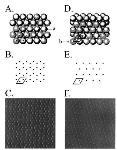 Satoh JJAP 35, 126 (1996) spincoating of polystyrene nanospheres of 200 500 nm in diameter in one or two layers deposition