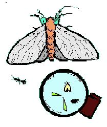 Most insects are small. Some are so small that you need a microscope to see them. Most insects have wings. Some have one pair of wings, some have two pair of wings.