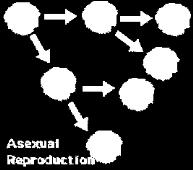 b. Oogenesis One diploid cell undergoes meiosis and unequal cytokinesis to produce one egg cell and three smaller cells called polar bodies which degenerate. 3. Asexual and sexual reproduction a.