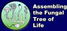 Challenge We would like to assemble the fungi tree of life.