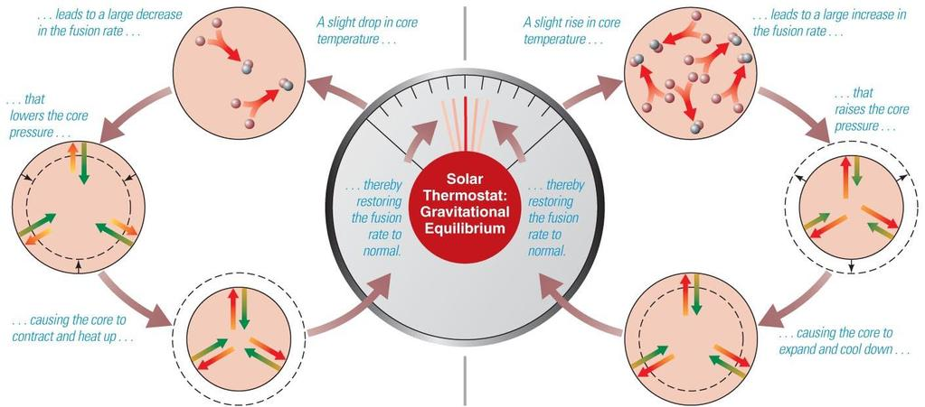 Solar Thermostat Decline in core temperature causes fusion rate to drop, so core contracts and