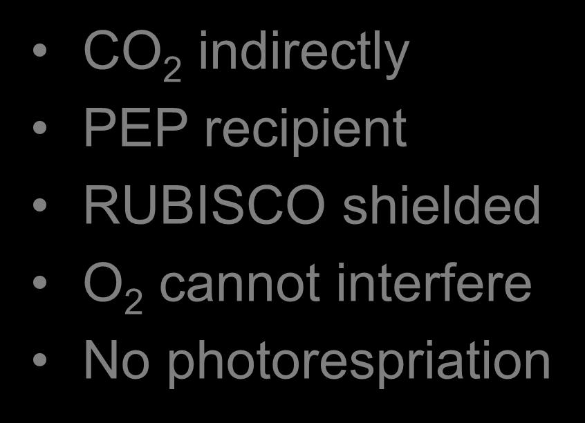 Photorespiration likely CO 2 indirectly PEP recipient