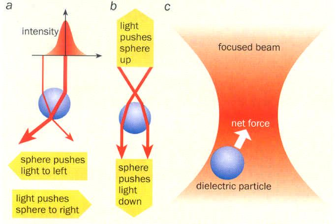 Optical Tweezers: manipulation If the bead is off-centre then it refracts more light in one
