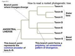 5: How to Read a Phylogenetic Tree Molecular Systematics
