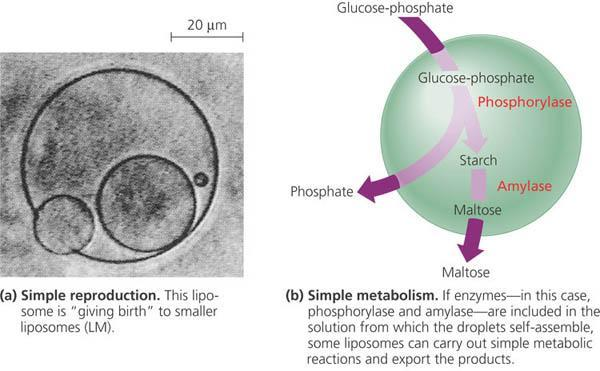 Bubbles separate inside from outside metabolism & reproduction Key