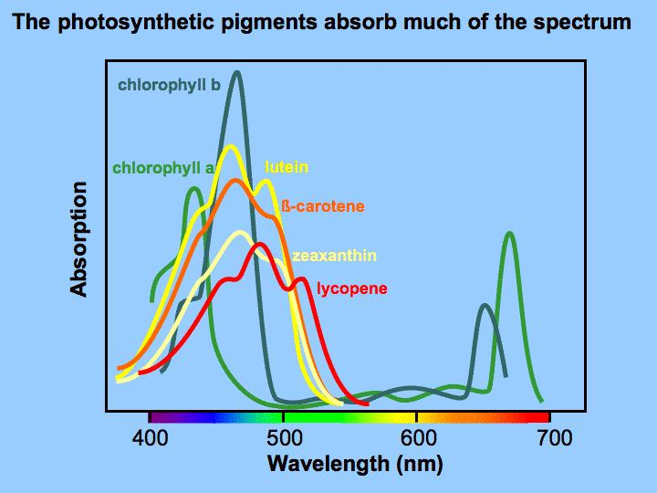 Absorption Spectrum Today, spectrophotometers can measure