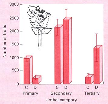 Figure 8.3 (3 rd ed.): Compensatory flower production by secondary and tertiary umbels in damaged parsnip Dr. S.