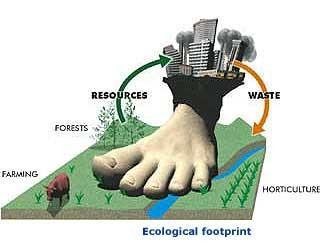 Capacity: Ecological Footprints Thinking About Ecological Footprints