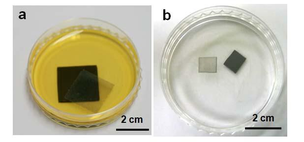 4 Fig. S5. Photograph images of large-scale graphene films floating on the solution. a, A photograph of the PMMA-supported graphene film floating on FeCl 3 etching solution.