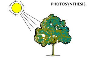 PHOTOSYNTHESIS: AN OVERVIEW THE PROCESS THAT CAPTURES LIGHT ENERGY AND USES IT TO MAKE CARBOHYDRATES (GLUCOSE).